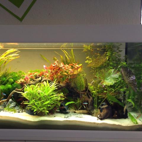 Aquarium  - (Pflanzen, Aquarium, reinigen)