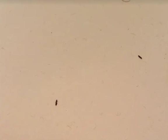 Insekten - (Insekten, Ungeziefer, Stoff voller Ungeziefer)