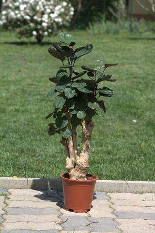 Hallo, ich hab eine Zimmerpflanze geschenkt bekommen und finde bzw weiß ich nicht wie ich herausfinden kann was das für eine ist & wie ich sie pflegen muss?