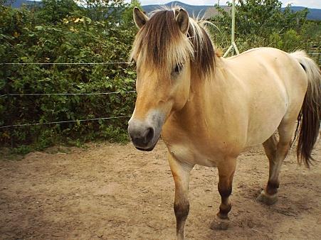 ab wie viel jahren kann man ein pferd einreiten pferde reiten. Black Bedroom Furniture Sets. Home Design Ideas