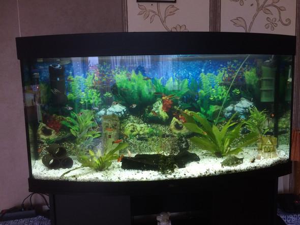 Das ist mein 250L Becken  - (Fische, Aquarium)