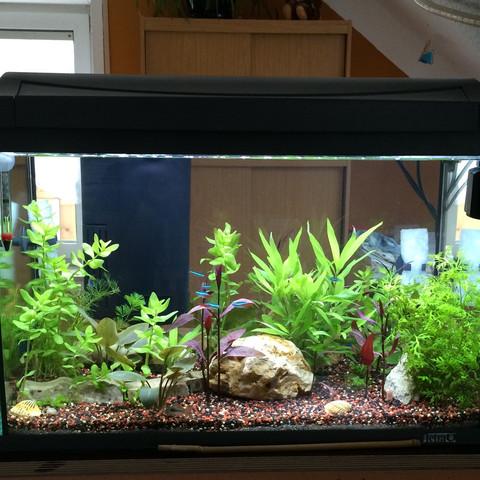 Mein Aquarium Vill zu viel Pflanzen ??    - (Ph, Wasserwert)