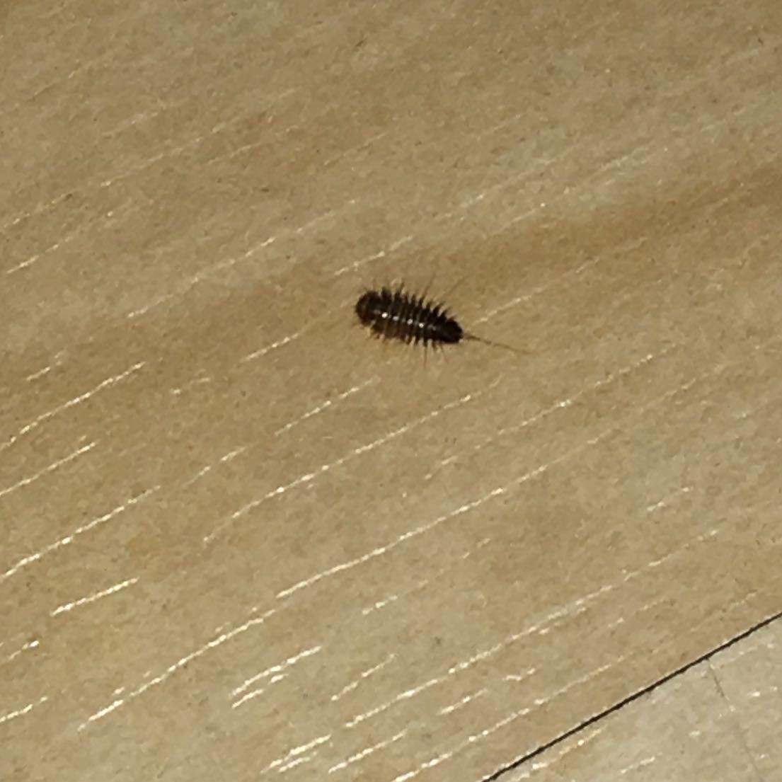 hallo kennst sich jemand mit diesen larven aus was kann ich tun habe schon alles versucht. Black Bedroom Furniture Sets. Home Design Ideas