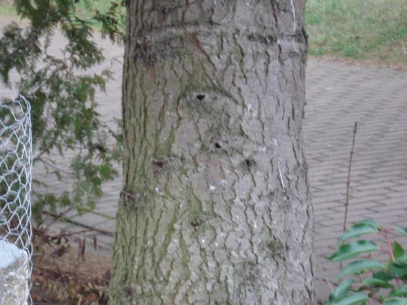 Stamm - (Natur, tanne)