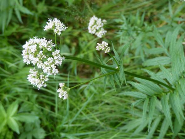 Blüte - (Name, Pflanzen, bestimmen)