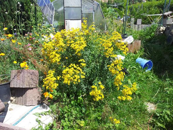 - (Pflanzen, Pflanzenart, Botaniker)