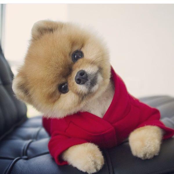 Hallo Leute Ich Wollte Wissen Was Für Eine Rasse Dieser Hund Hat