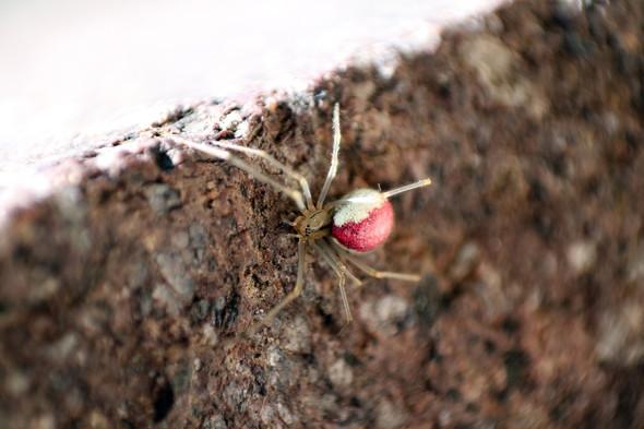 Spinnenbild 1 - (Spinne, Arachnida)