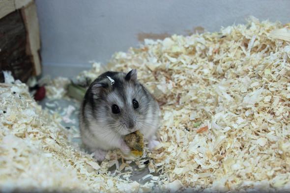 Mein kleiner Schatz  - (Tiere, Hamster, Nager)