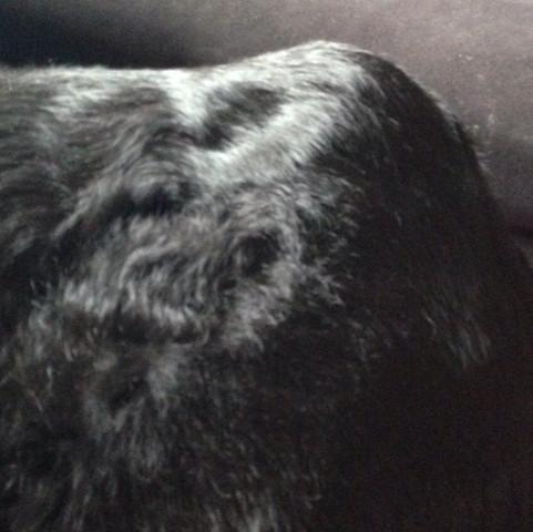 Siehe Bild da ist der Knubbel :( - (Hund, Tierarzt, ruede)