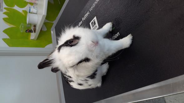 Mein Kaninchen - (Tiere, krank, Kaninchen)
