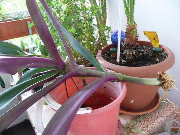 Hallo Pflanzenfreunde, wie heißt die gezeigte Zimmerpflanze?