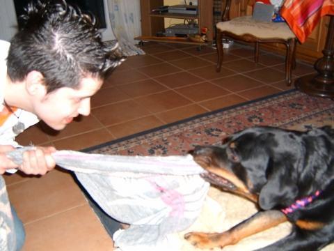 Bilduntertitel eingeben... - (Tiere, Hund, Rottweiler)