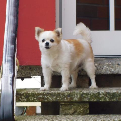 bdbdjdjd - (Hund, Haustiere, Rasse)