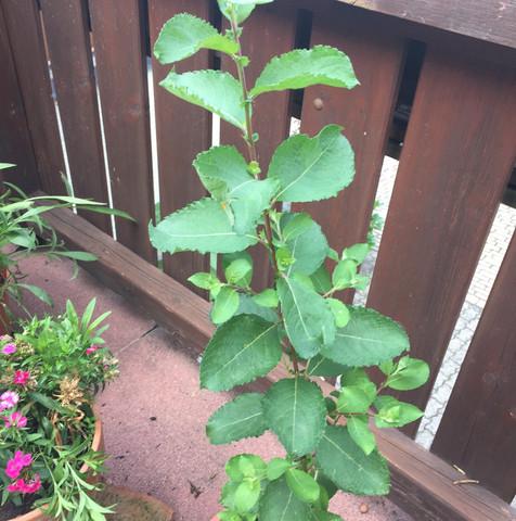 Oben - (Garten, Pflanzen)