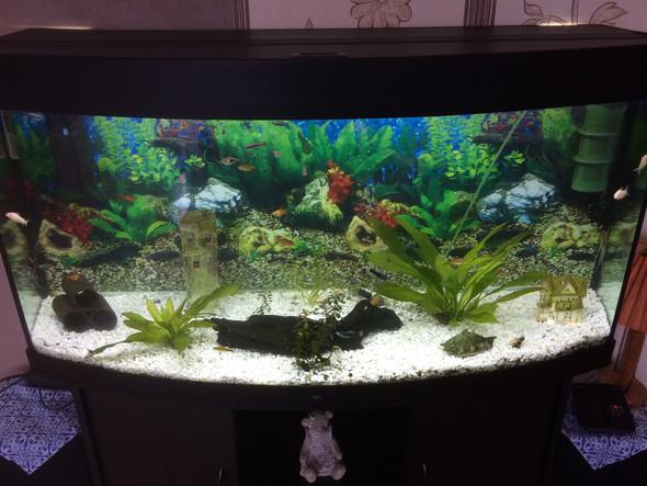 hallo welche pflanzen sind gut f r ein 250l becken aquarium aquarium pflanzen. Black Bedroom Furniture Sets. Home Design Ideas