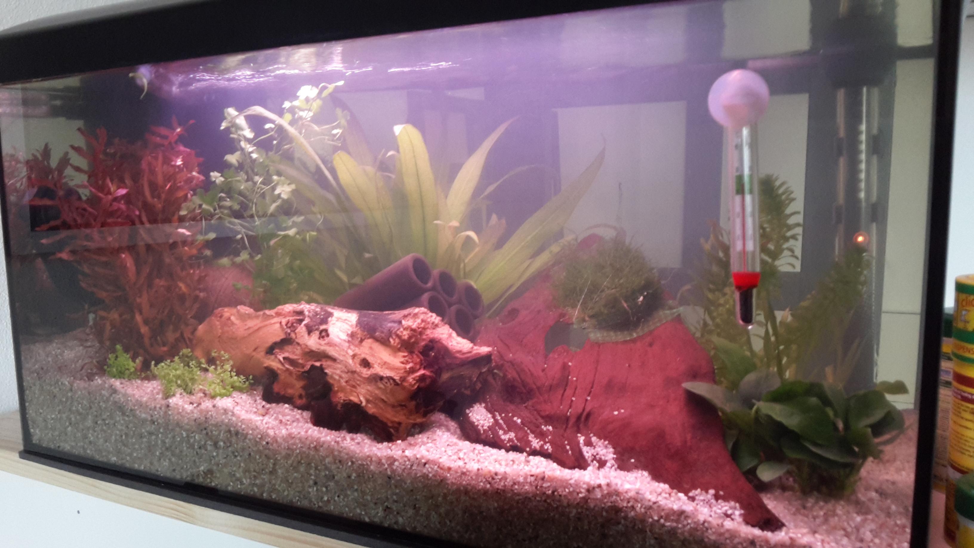hallo wie findet ihr jetzt mein aquarium wasser fische. Black Bedroom Furniture Sets. Home Design Ideas