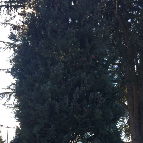 Bild 1/2b - (Garten, Baum, Baumarkt)