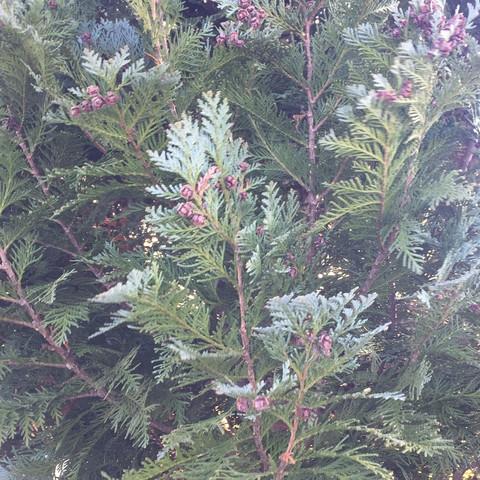 Bild 2/2b - (Garten, Baum, Baumarkt)