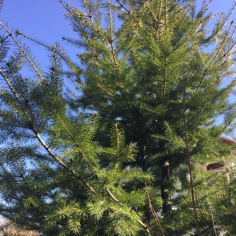 Bild 1/2a - (Garten, Baum, Baumarkt)