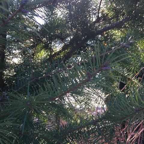 Bild 2/2a - (Garten, Baum, Baumarkt)