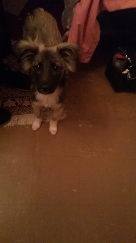 Süßer Hund - (Hund, Rasse)