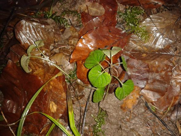 Wildpflanze ? - (Biologie, Pflanzen, Natur)
