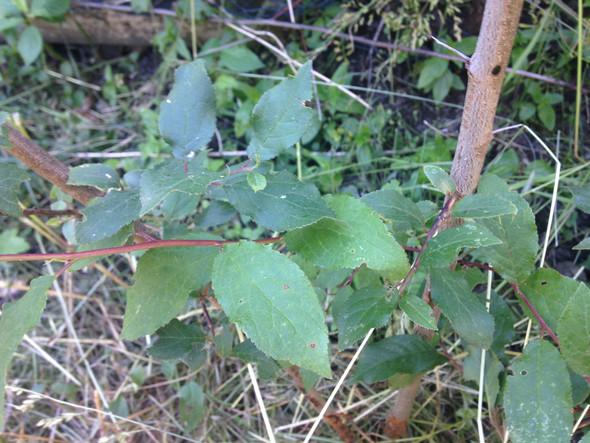 Blätter von oben - (Garten, Wurzel, unbekannt)