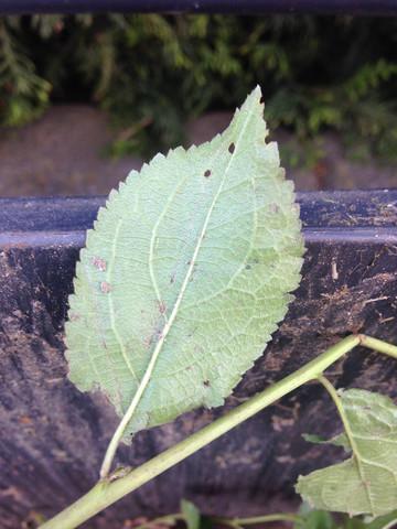 Blattunterseite - (Garten, Wurzel, unbekannt)