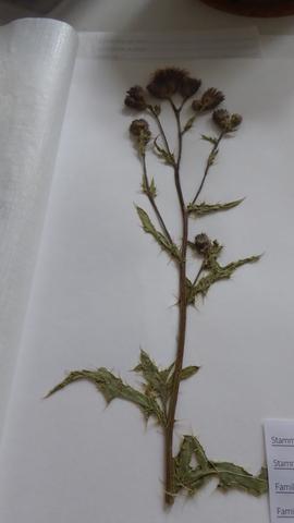 Hallo.ich Lege Gerade Ein Herbarium An Und Habe Probleme ... Probleme Mit Den Pflanzen