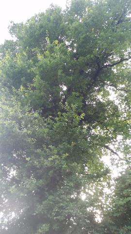 Baum - (Recht, Gesetz, gutefrage)