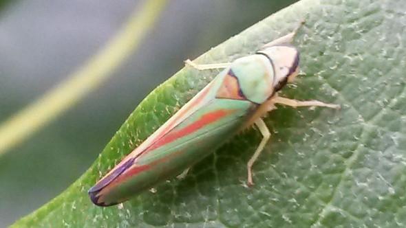 Insekt 1 - (Tiere, Insekten)