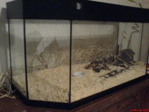 Bilduntertitel eingeben... - (Aquarium, Hamster)