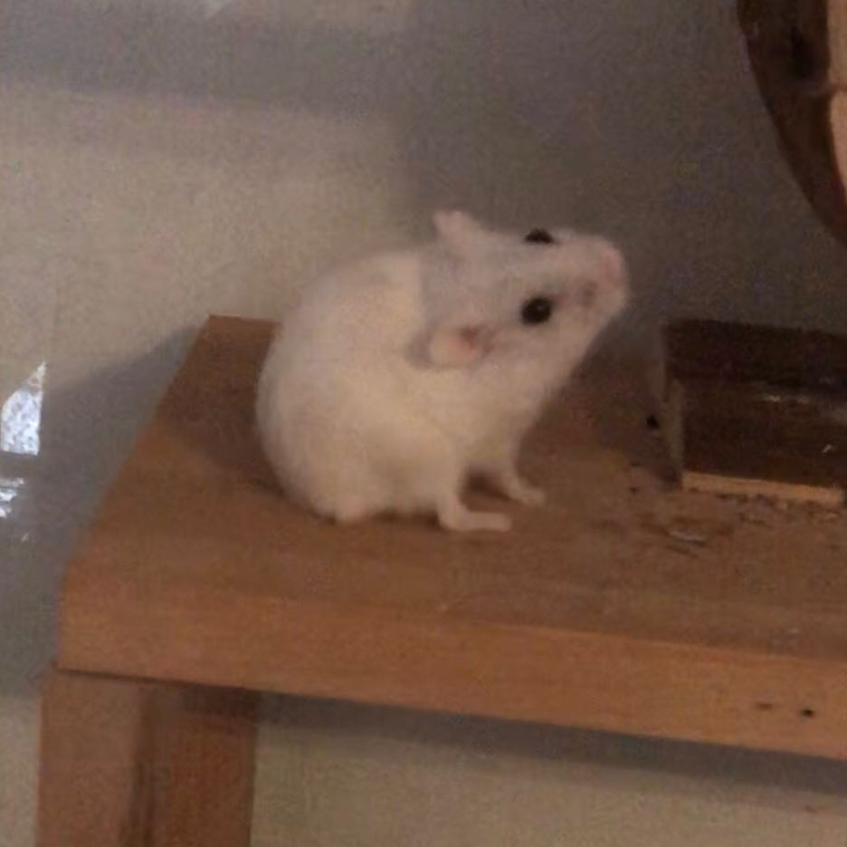 Hamster Schlaganfall
