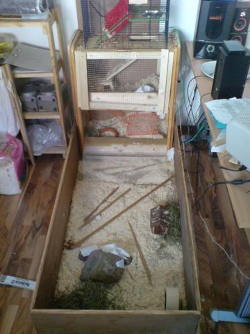 Auslauf - (Tiere, Hamster, Tierarzt)