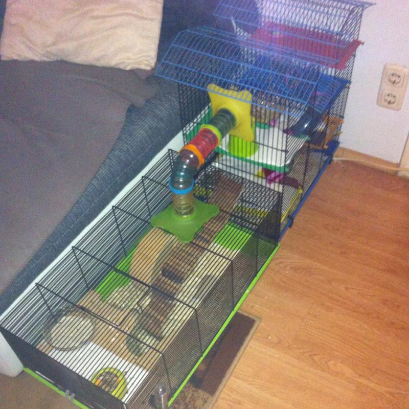 hamster k fig gro genug hamsterk fig. Black Bedroom Furniture Sets. Home Design Ideas