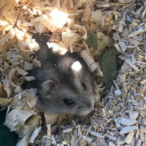 Hamster kommt nicht raus ( frage existiert schon bitte ignorieren)?
