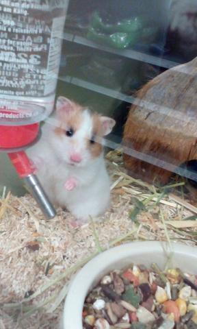 hamster spielzeug hamsterk fig. Black Bedroom Furniture Sets. Home Design Ideas