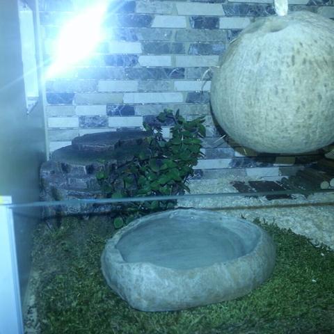 Tropic Anteil :) Mit essbaren Hamster pflanze - (Hamster, Käfig)