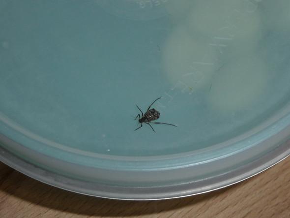- (Insekten, Insekten im Haus)