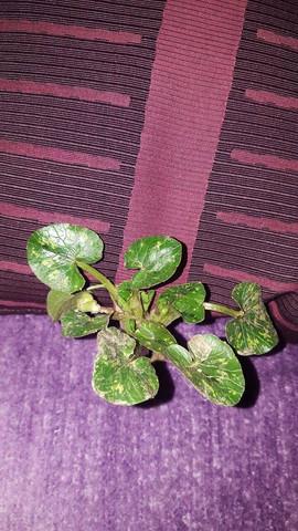 Die Pflanze - (Garten, Pflanzen, Blumen)