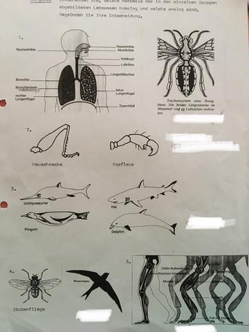 - (Schule, Biologie, Evolution)