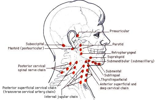 harter knubbel am Hinterkopf (Lymphknoten)