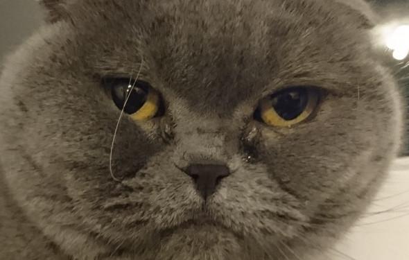 Die Katze - (Krankheit, Augen, Katze)