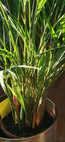 Hat diese Pflanze einen Parasitenbefall?