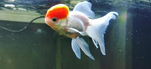 Hat dieser Fisch Krebs?