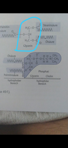 Hat Glycerin nicht 8 Wasserstoffatome?