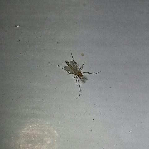 hat jemand eine ahnung was das hier f r kleine fliegen sind insekten. Black Bedroom Furniture Sets. Home Design Ideas