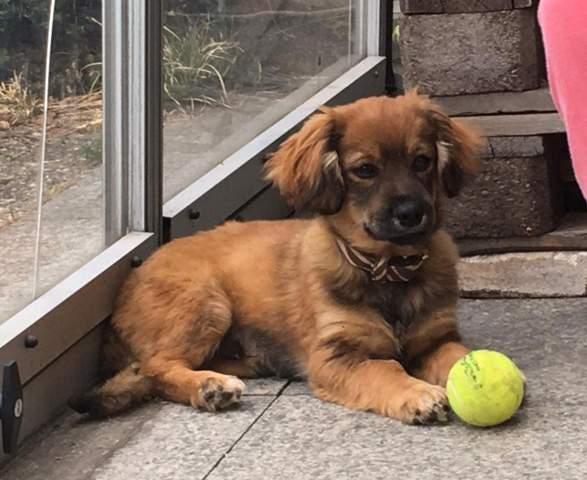 Hat jemand eine Idee, was dieses Hundi für ein Mix ist bzw. wie groß er wird?