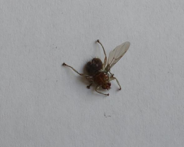 Bild 2 - (Insekten, welches)